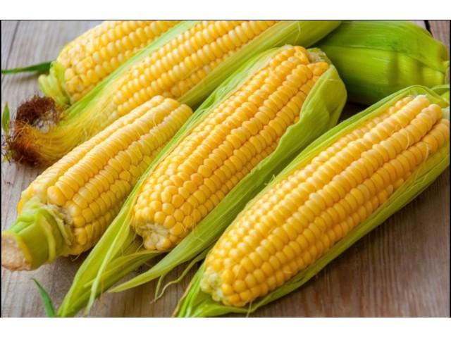 友善農場 天然陽光黃金玉米塊(買三送一)